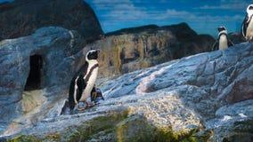 Penguin show in Siam Ocean World Stock Photo