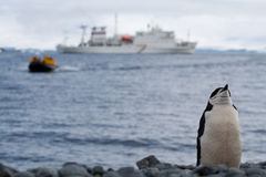 Penguin stance. A penguin looks displeased as a zodiac of tourists comes its way Stock Photography