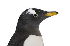 Penguin standing Royalty Free Stock Photos