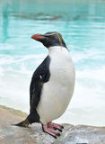 A penguin Stock Photography