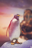 Penguin standing on the rocks Royalty Free Stock Photography