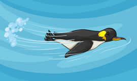 Penguin swimming under the sea Stock Images
