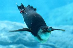 Penguin & Sydney Aquarium Stock Photo