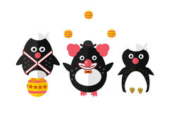 Penguin vector animal character illustration. Stock Photos