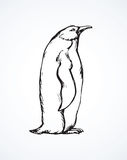 Penguin. Vector drawing Stock Photography