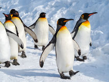 Penguin walk on snow Stock Photos