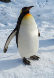 Penguin walk on snow. Emperor penguin walk on snow Royalty Free Stock Photos