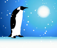 Penguin, winter in Arctic Stock Image