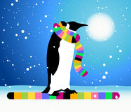 Penguin, winter in Arctic Stock Photography