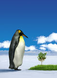 Penguin wondering grass. Lone penguin wondering green grass and small tree on Antarctic royalty free stock photo