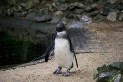 Penguin in zoo Stock Photo