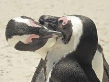 Penguines obrazy stock