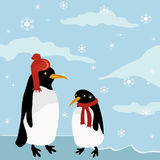 Penguines in winter Stock Images