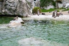 penguins ζωολογικός κήπος στοκ φωτογραφία