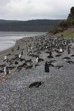 Penguins σε Ushuaia Στοκ εικόνα με δικαίωμα ελεύθερης χρήσης