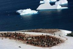 Penguins στην Ανταρκτική Στοκ φωτογραφίες με δικαίωμα ελεύθερης χρήσης