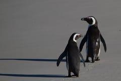 Penguins στην παραλία λίθων στοκ φωτογραφία με δικαίωμα ελεύθερης χρήσης