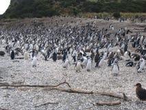 Penguins στο νησί penguin, ushuaia Στοκ Φωτογραφίες