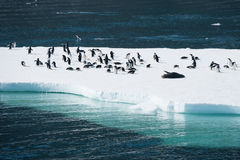 Penguins στο χιόνι στοκ εικόνες με δικαίωμα ελεύθερης χρήσης