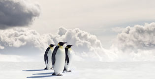 penguins τρία Στοκ εικόνα με δικαίωμα ελεύθερης χρήσης