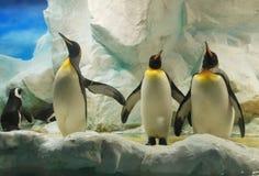 Penguins Stock Image