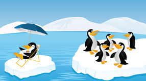 Penguins. Funny picture of penquins floating on the iceberg Stock Photo