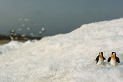Penguins. Royalty Free Stock Photography