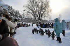 Penguins. At Asahiyama Zoo in Asahikawa (Hokkaido, Japan Royalty Free Stock Photos