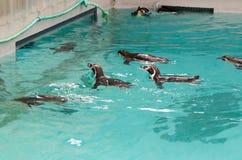 penguins stock foto's
