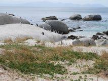 penguins royalty-vrije stock foto's