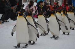 penguins Στοκ φωτογραφία με δικαίωμα ελεύθερης χρήσης