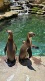penguins Stockfotos