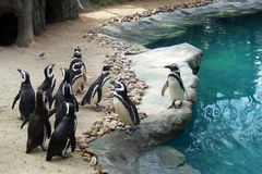 Penguins. In the zoo of Madrid - Spain stock photo