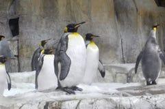 penguins lizenzfreies stockfoto