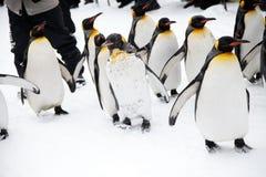 penguins stock fotografie