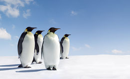 Penguins. A flock of penguins on the snowy Antarctic landscape