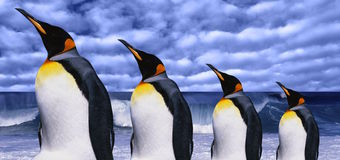 Penguins. Emperors four penguins on sea wave background Royalty Free Stock Image
