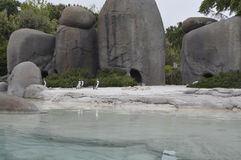 penguins royalty-vrije stock afbeeldingen