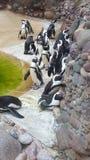 penguins royalty-vrije stock afbeelding