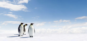 Penguins in Antarctica. Three penguins walking across icy Antarctica landscape with blue sky and cloudscape in background Royalty Free Stock Photo