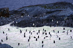 Penguins in the Antarctica Royalty Free Stock Images