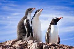 Penguins in Antarctica Stock Image