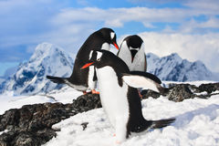 Penguins in Antarctica Royalty Free Stock Photos