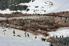 Penguins in Antarctica Royalty Free Stock Image