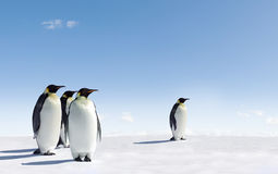 Penguins in Antarctica. Group of penguins stood on snowy landscape of Antarctica