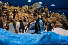 penguins in antarctica, digital photo picture as a background royalty free stock photos