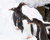 Penguins in Antarctica Stock Photo