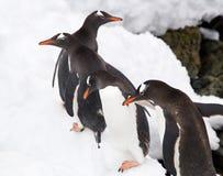Penguins in Antarctica Stock Photo