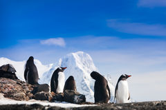 Penguins in Antarctica Stock Image