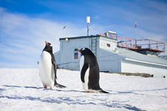 Penguins in Antarctica Royalty Free Stock Photo
